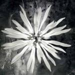Ideal lux Corallo SP12 bianco